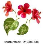 Beautiful Photo Of Hibiscus...