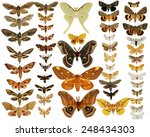 Collection Of Moths Butterflie...