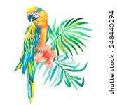 macaw isolated on white... | Shutterstock .eps vector #248440294