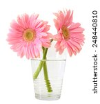 Glass Vase With Pink Daisy...