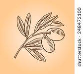 vector sketch of olive tree...   Shutterstock .eps vector #248472100