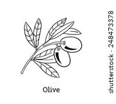 vector sketch of olive tree... | Shutterstock .eps vector #248473378