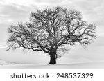 Lonely Winter Tree. Sweet...