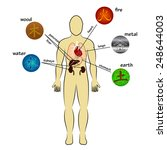 five elements and human organs | Shutterstock .eps vector #248644003