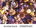 Colorful Fall Leaves On The...