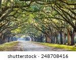 Savannah  Georgia  Usa Oak Tree ...