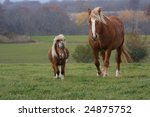 A Large Clydesdale Horse And A...