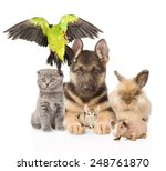 large group of domestic animals.... | Shutterstock . vector #248761870