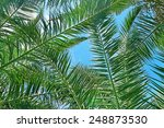 Branches Of A Coconut Tree On...