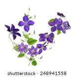 Beautiful Purple Clematis...