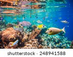 reef with a variety of hard and ... | Shutterstock . vector #248941588