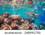 hawksbill turtle   eretmochelys ... | Shutterstock . vector #248941750