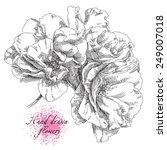 hand drawn rose flowers | Shutterstock .eps vector #249007018