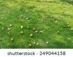 Autumn Leaves Fallen On Green...