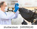 Veterinarian Examines   Animal...