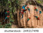 macaws in clay lick in the... | Shutterstock . vector #249217498