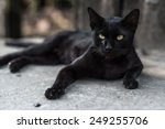 Stock photo a black cat on street 249255706
