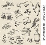 set of spices and herbs vector... | Shutterstock .eps vector #249264664