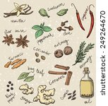 set of spices and herbs vector... | Shutterstock .eps vector #249264670