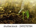 green seedling growing on the... | Shutterstock . vector #249270784