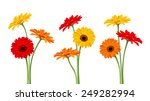 Vector Colorful Gerbera Flower...