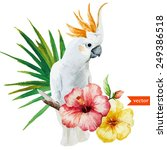 white parrot  hibiscus ... | Shutterstock .eps vector #249386518
