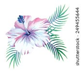 hibiscus and palm leaves... | Shutterstock .eps vector #249455644