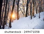 Frosty Amazing Winter Forest