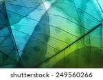 macro leaves background texture ... | Shutterstock . vector #249560266