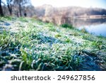 Frozen Hoarfrost Grass With...