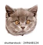 Head Cat In Paper Side Torn...