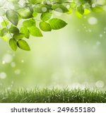 spring or summer season... | Shutterstock . vector #249655180
