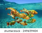 school of colorful tropical... | Shutterstock . vector #249659404