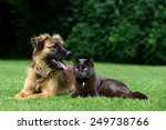 Stock photo dog and cat 249738766