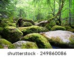 covered with moss rocks and... | Shutterstock . vector #249860086