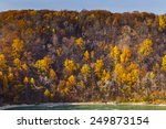 Fall Forest Landscape