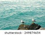 seagulls | Shutterstock . vector #249874654