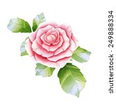 pink watercolor rose on the... | Shutterstock . vector #249888334