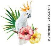 Parrot  Hibiscus  Flowers ...