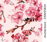 cherry blossoms watercolor... | Shutterstock .eps vector #250055824
