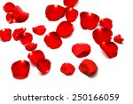 Stock photo beautiful rose on white background 250166059