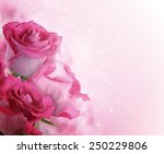 Stock photo beautiful background with flowers roses 250229806