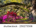 Постер, плакат: Charleston SC Spring Bloom