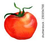 a watercolor tomato on white... | Shutterstock . vector #250356700