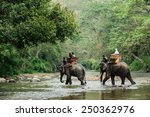 elephant trekking through... | Shutterstock . vector #250362976