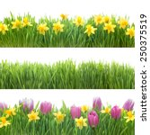 Stock photo green grass and spring flowers isolated on white background 250375519