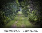 Dirt Road Lined With Shrubs An...