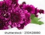purple chrysanthemums flower on ... | Shutterstock . vector #250428880