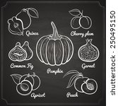 chalk painted exotic fruits set ... | Shutterstock .eps vector #250495150