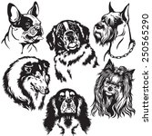 set with dogs heads of... | Shutterstock .eps vector #250565290